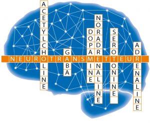 les hormones libérées par le cerveaux dans le processus de détente et relaxation